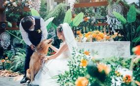 金领汇-1婚礼图片